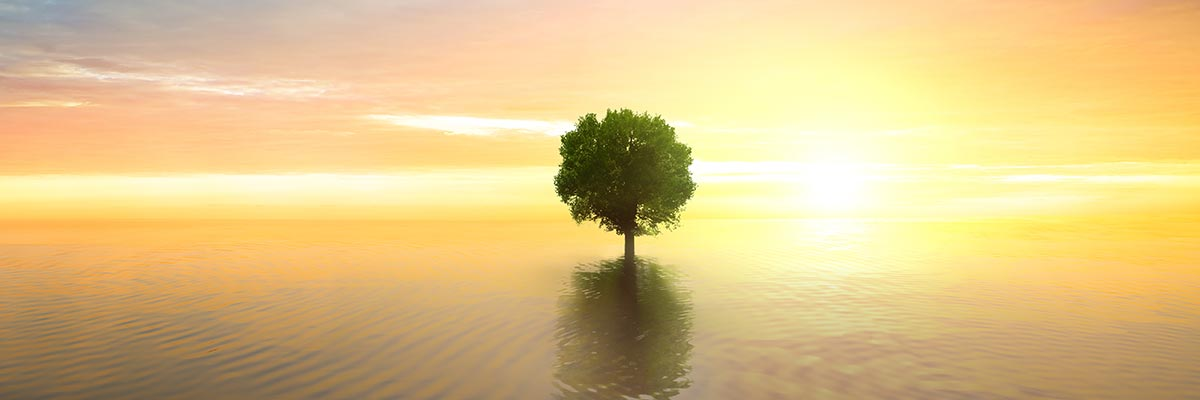 Baum im See bei Sonnenuntergang